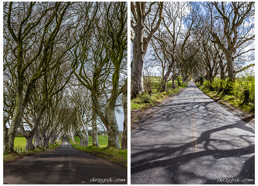 The Dark Hedges / Irlandia Północna