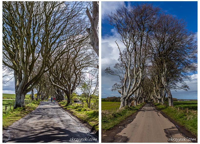 The Dark Hedges / Irlandia Północna